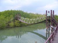 Симпатичный мостик в мангровых зарослях
