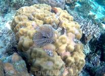 Какой-то из морских червей на кораллах