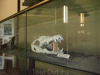 Торремолинос. Крокодиловая ферма. Музей. Череп крокодила