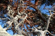 В тине и ржавчине эти кипарисы создают необыкновенное зрелище.