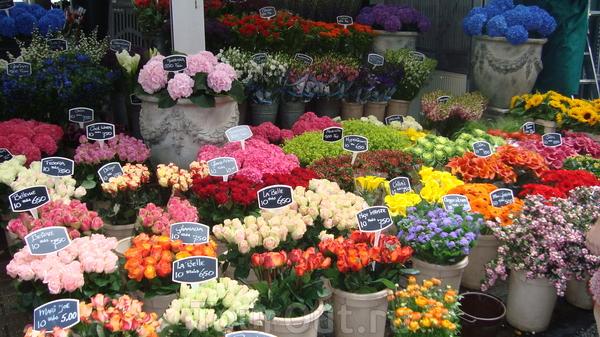 Мир цветов официальный сайт 115