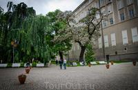 На территории Пражского Града. Цветущие деревья, скамеечки...все располагает)