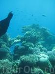 в акванариуме