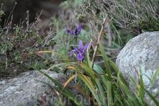 Одинокий цветочек - василёчек)))