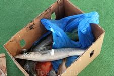 А вот и моя рыбка (верхняя). Их щука, под названием барракуда. Зубы по 3-4 мм, морда щуки как пить дать. В общем, час ловли и на катер (человек где-то ...