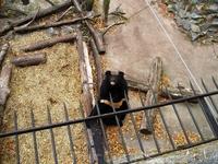 В теплое время года в парке перед замком гуляют павлины, в небе кружат соколы и ястребы, а во рву можно увидеть медведей.