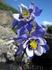 Цветок возле Мульты