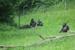 Недалеко от Биллунда в г.Гивскуд есть один из сафари-парков Дании. Поведение животных в клетках или на огромных огороженных территориях это совершенно разные вещи. Наблюдать можно часами.