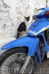 Кошки Линдоса в коллекцию...
