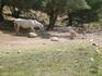 По зеленой траве протекает ручей,пасутся лошадки,ослики.Наверху  из-за дерева выглянет горный козлик и уйдет по скале. Там где вода ,обязательно предупреждает ...