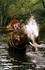 Прогулка на слонах по джунглям острова с водными процедурами на десерт