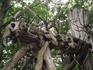 Пространственная инсталляция Николая Полисского и Никола–Ленивецких Промыслов размещена в лесу, на месте того самого Городища. Полисский  использует весь ...