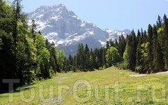 Альпийский луг и Цугшпитце