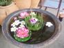 цветочные тортики