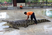 Показали шоу с участием крокодилов, по времени  где-то 15 минут