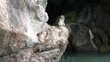 На пути к острову Джеймса Бонда - макак-крабоед