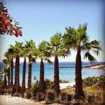 Оох уж эти пальми на пляже Парадайз