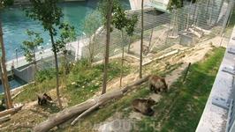 Берн. Знаменитая медвежья яма