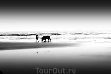 Парень моет быка в море