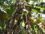 Это просто бананы в джунглях. Дикие.