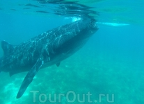 Одна из китовых аул
