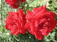 Никиктский ботанический сад