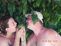Запретный плод - зеленый и частнособственнический