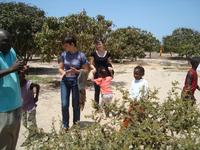 в саду у Фандинга ( песок + несколько манговых деревьев + постоянный ветер)