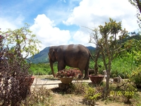 слона жалко