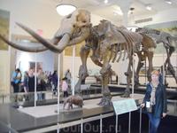 В музее Естественной истории