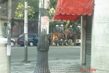 Сан-Паулу. Конная полиция. В больших городах, из-за высокого криминального уровня,  на улицах дежурят полицейские патрули. Особенно много их становится ...