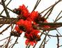 Цветущее дерево без листьев:)