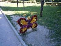 бабочки из живых цветов
