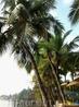 Пальмы у реки Сал