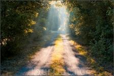 Утренней дорогой. Такие дороги там вокруг полей.