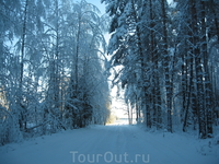 Выезжаем из леса. Это дорога к свету!