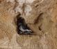 Голуби облюбовали ниши в гробницах и выводят там птенцов. Торжество жизни на территории мертвых!