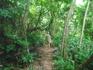 В джунглии!