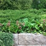 просто чудо, как садовник сочетает растения!