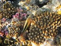 Рыбка и коралл.