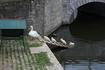 Бельгия. Лебеди всюду!