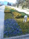 первые  цветы города