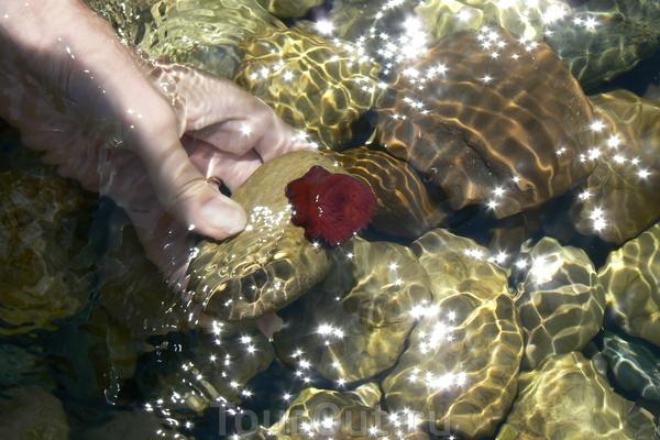 kakoi to morskoij zverj