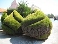 растительность на территории отеля
