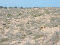 А вот это уже маленькие газели, которых мы видели лишь через окно автобуса. Эта часть прогулки по заповеднику доступна только на машине или автобусе