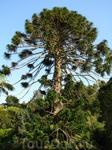 в парке Монсеррат, каких там только нет деревьев и прочего )) от лиственных и елей до пальм и кактусов