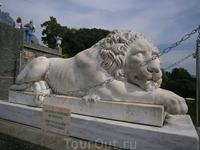 усталый лев