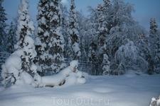 Снега в тайге было по пояс.