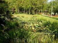 Японский парк . Ташкент