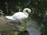 Лебедь в Алупкинском парке